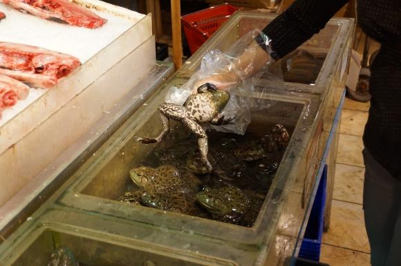 Sapo vivo / Live Frog